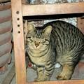 Photos: 2018年1月15日の可愛い迷い猫
