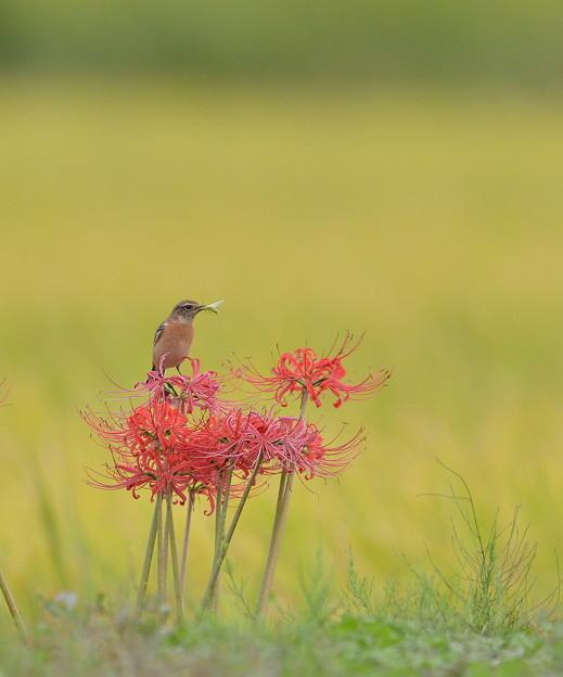 写真: 秋のカワ(・∀・)イイ!!お客様♪
