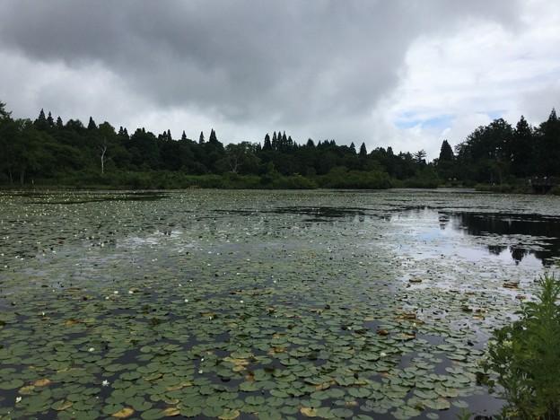 1702-いもり池2