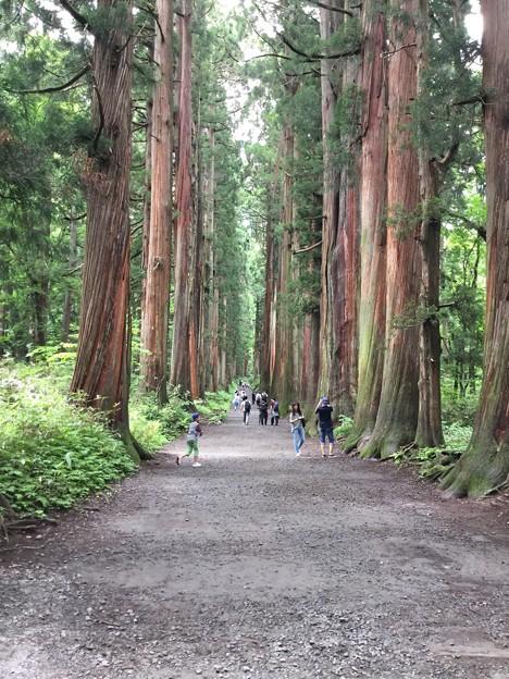 1702-戸隠神社・奥社への道