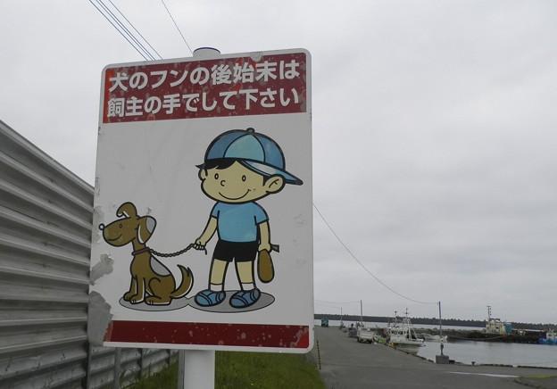 犬糞~天塩町