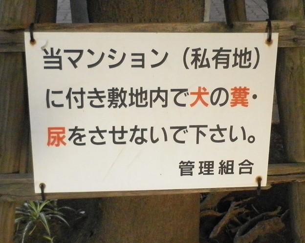 犬糞~横浜市