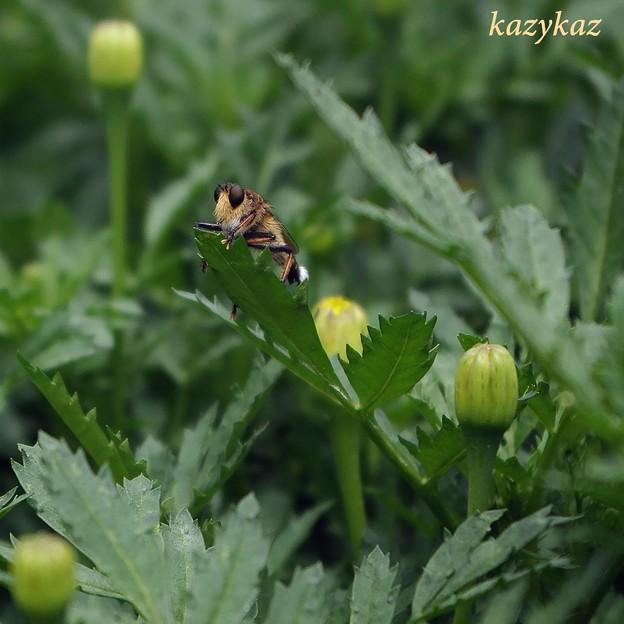 写真: 花とヒゲオヤジ