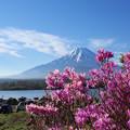 写真: 精進湖にて4