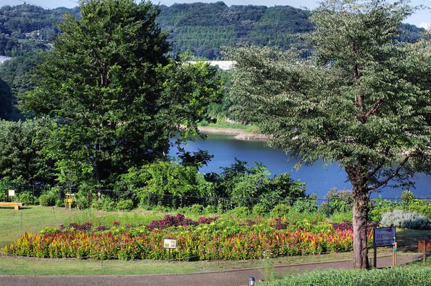 花も湖水も美しく