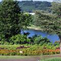 写真: 花も湖水も美しく