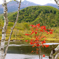 写真: 静かな湖畔に