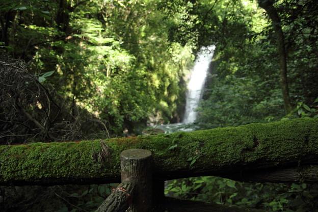 小滝を上から倒木が・・・
