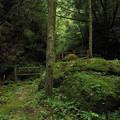 写真: 小滝の苔