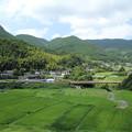 写真: 市渡瀬の田んぼ