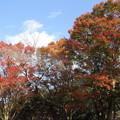 写真: 早い紅葉とこれからの紅葉