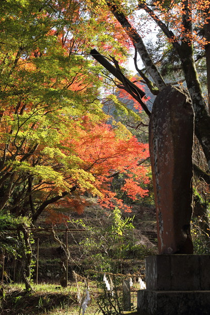 写真: かがやく紅葉