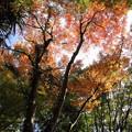 写真: 進んでいる紅葉