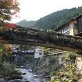 写真: 湯の鶴温泉の秋