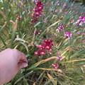 写真: 謎の花