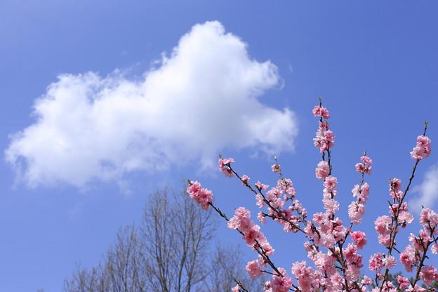写真: 雲のお花見
