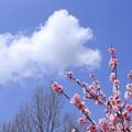 雲のお花見