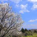 春の日曜日