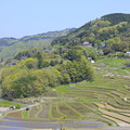 Photos: 棚田の春