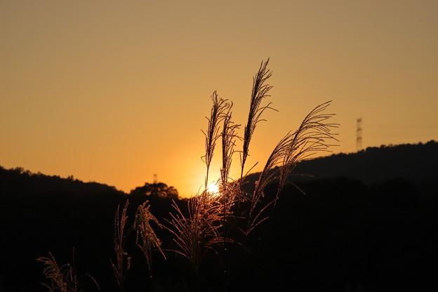 写真: 秋分
