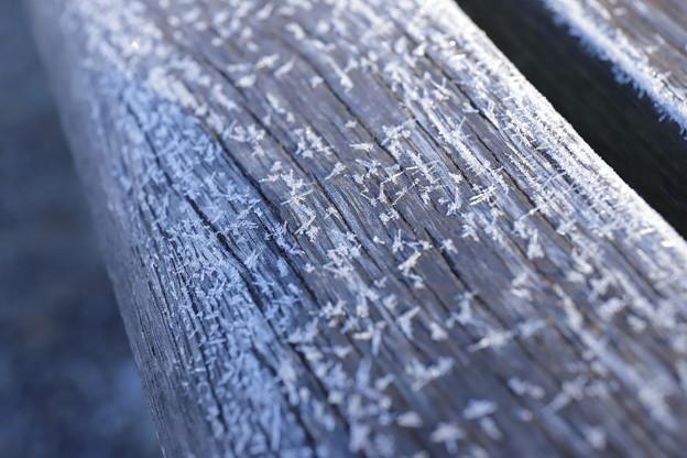 写真: 霜降りる朝