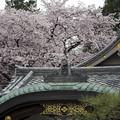 武田菱と桜