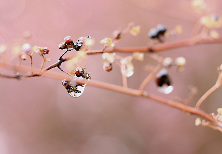キラリ!春〜^^