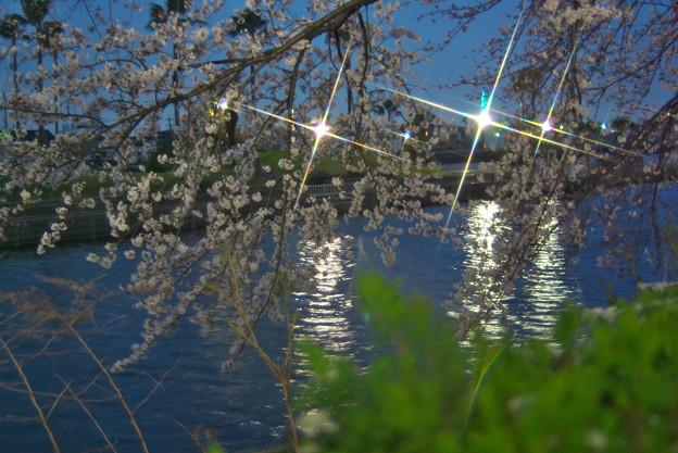 ジャンクで夜桜