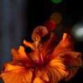 写真: 綺麗なオレンジ色