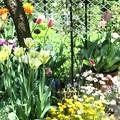 スプリンググリーンの咲く花壇