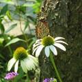 蝶が来る庭
