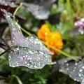 写真: 雨ですね