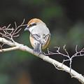 Photos: 小さな猛禽