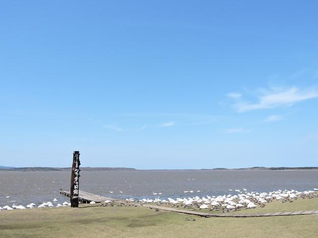 クッチャロ湖_1