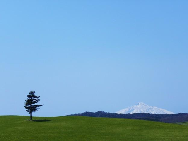 今日の「こころ旅」で火野正平が訪れた一本松