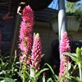 写真: 蜜蜂と花