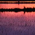 田に映る夕焼け