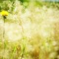 雑草の昼下がり