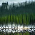 写真: 夢幻森林