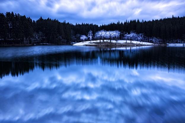 写真: 粉櫻追雲