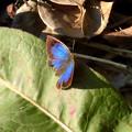 ちょう(蝶)の集い処:最新