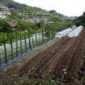 Photos: のほほん農園風景