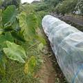 Photos: のほほん農園4