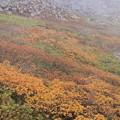 写真: 雲にかすむ紅葉