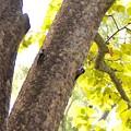 写真: アカゲラ巣立ち雛とアカゲラ雄親