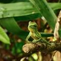 写真: 正真正銘の爬虫類
