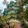 写真: 名古屋城 春
