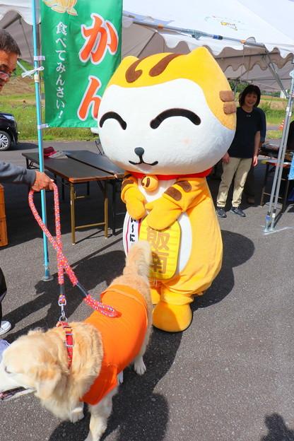 第27回 コスモス祭 (48)