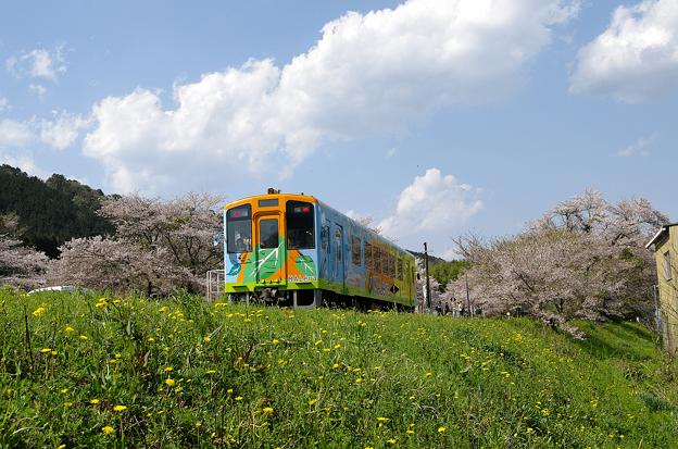 桜と樽見鉄道(7)