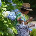 紫陽花を背に編み物する女性